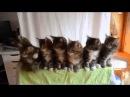 Забавные синхронные котята! Мы одна команда!!!