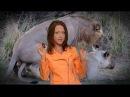 Лев, животное-мудак: секс 40 раз в день, многоженство, драки, тунеядство // Все как у...
