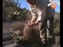 Наука выживать - Аризонская Пустыня