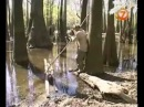 Наука выживать - Болота Джорджии