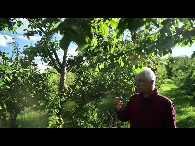 Miracle Farms, a 5-acre commercial permaculture orchard in Southern Quebec, Canada