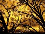 Svarga - Ветры прощают всё 2009 No VideoClipe