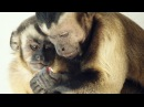 Moral behavior in animals Frans de Waal