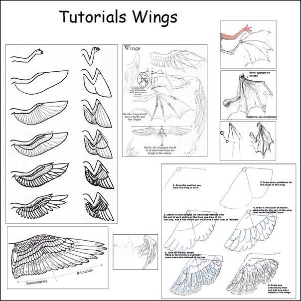 1000  images about how to draw wings on pinterest