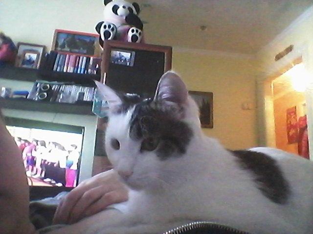 Ребята, отдаю кота 28 мая будет 1 год, зовут Мурзик.