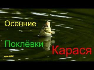 Осенние Поклёвки Карася Пруд - Горячий