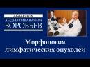 Морфология лимфатических опухолей Раздел1