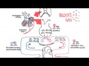 Blood Gases O2 CO2 and ABG