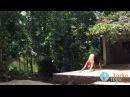 Йога для начинающих. Аштанга Виньяса, первые шаги. - YouTube