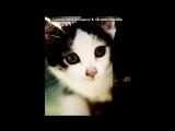 Со стены Кот под музыку Детские песни - про кота!=)) vkhp.net - Песня СУПЕРРР смешная!!!!. Picrolla