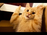 Funny Cats New Compilation - Best Cat Vines 2014/2015 - Funny Fails