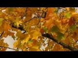 Smile of Autumn. Luda Gogolinski . Vancouver . Canada .