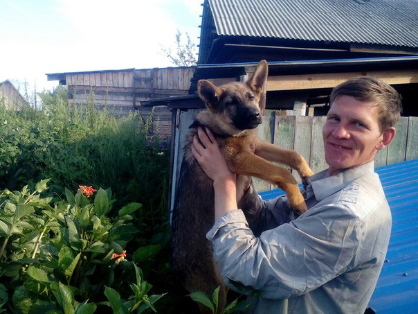 Собаки в Тайшете, продажа с фото, цены   купить щенка