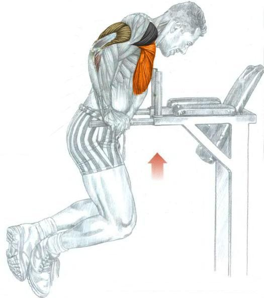 техника выполнения упражнений на брусьях