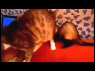 Неугомонный хорёк и кот [ПРИКОЛЫ 2014 ПРИКОЛЮХА] Unruly ferret and cat