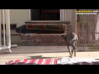 Bir Köpeğin Hayata Döndürülme Hikayesi
