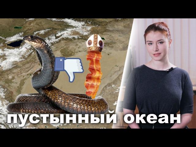 Дислайк скоро на Facebook