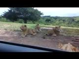 Лев открыл дверь машины