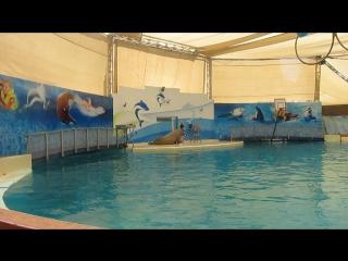 аквапарк Троя морж