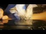 Мяуканье кошки -- смотрите на реакцию своих котов