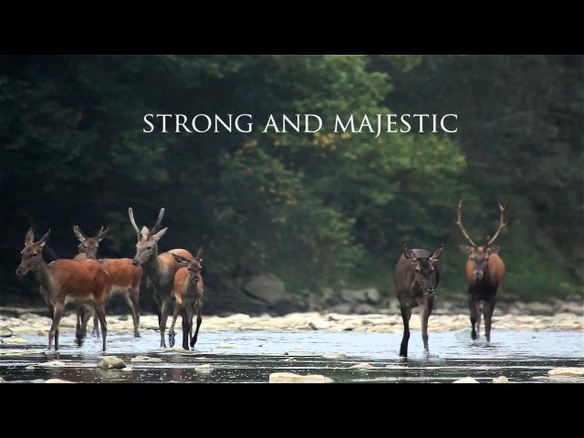 WOLF MOUNTAINS trailer / Wilcze góry - zwiastun