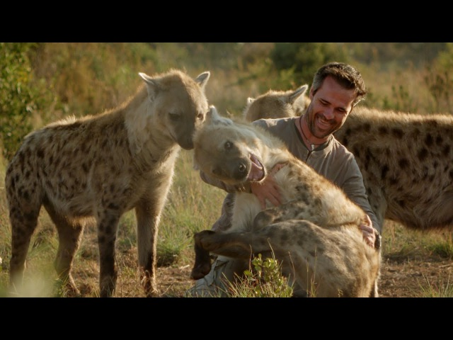 The Man Who Tickles and Plays with Hyenas