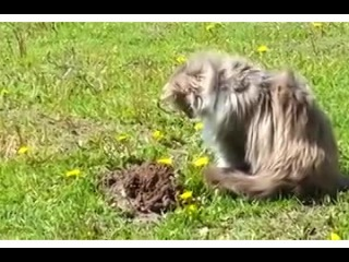 Как кот крота унизил