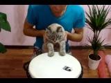 Кот - знатный барабанщик