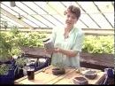 Емкости для выращивания рассады помидоров (томатов) Огород без хлопот