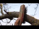 Что делать с лишайником и мхом на деревьях