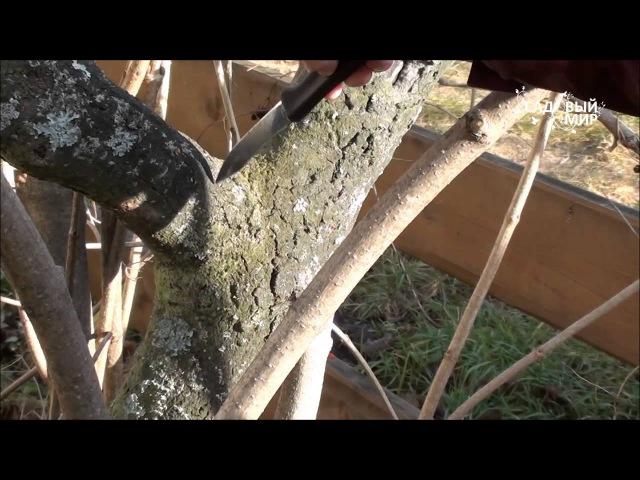 Осенняя обрезка деревьев. Сайт Садовый мир