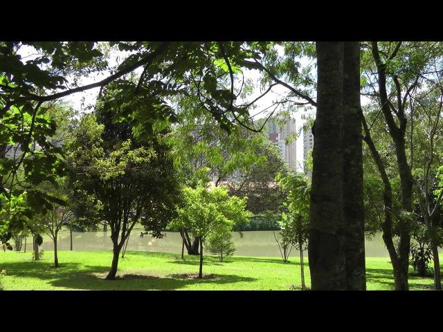 Jardim Botânico Curitiba 319 anos