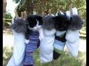 Даже котёнок знает своё место Прикольное видео про кошек Приколы с кошками Funny cats