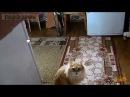 У нашего кота всё ОК Прикольное видео про котов Приколы с кошками Funny cats compilation