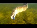Подводный ролик об особенностях атак щуки в разные сезоны.