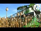 Blauwmaanzaad dorsen / Harvesting Opium Poppy - John Deere S680 - Thes Agro