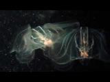 Инопланетяне в океанариуме Валенсии