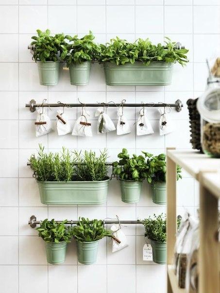 Комнатные растения в современном интерьере: 5 идей, 20 примеров ❤️