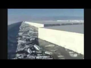 Резаный лёд антарктиды