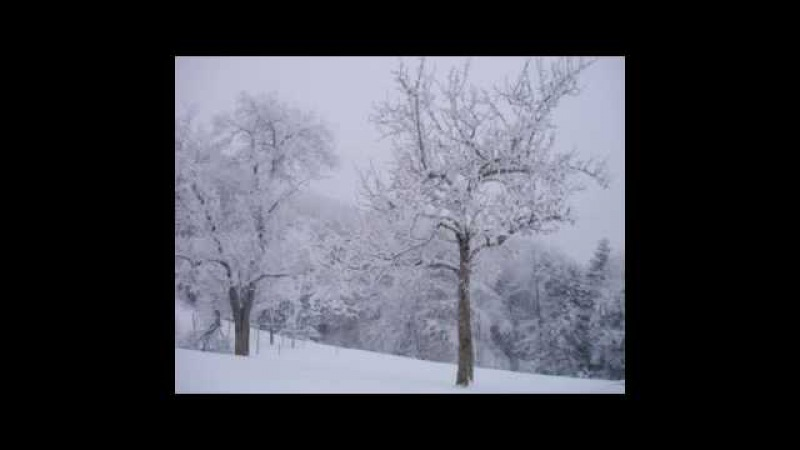 Max Bruch - Cancona für Violoncello und Orchester op. 55