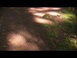 Acoustic Dark Folk - NEMUER - Under the Tree of Memories