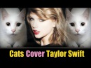 Cats Sing Blank Space | Taylor Swift - Cats Version