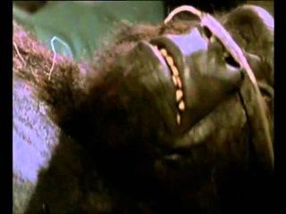 Кинг Конг жив. Трейлер (1986) HD