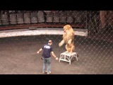 В Волгограде дрессировщик из Египта показал детям как приучить льва