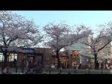 Япония. Дарья проводит экскурсию