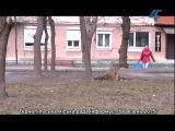 Тернопільська міська рада інформує (відео-новини)