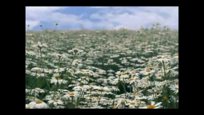 Анна Сизова - Россия - Ромашковое поле (видеофильм)