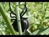 24 июня 2015 г. Казахстан атаковали смертельно опасные пауки -