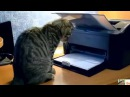 Самая прикольная сборка видео про кошек!