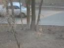 Собака на качели